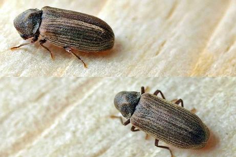 Lotta contro tarli catania, Lotta contro termiti catania